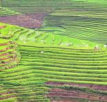 Canlaon City Rice Terraces