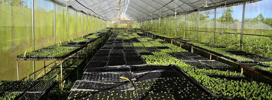 Costales Nature Farm
