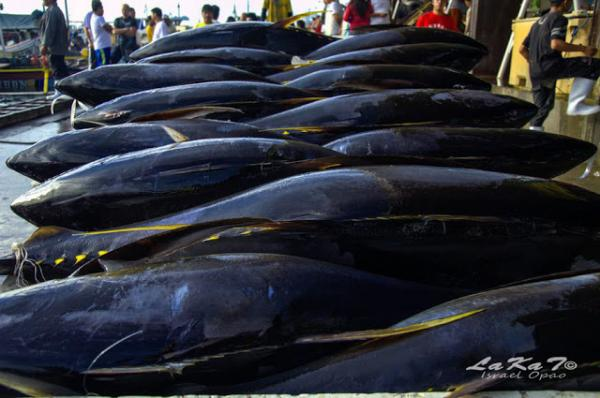 Why General Santos is the Tuna Capital of the Philippines