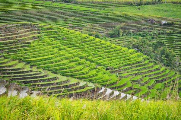 Canlaon City Rice Terraces