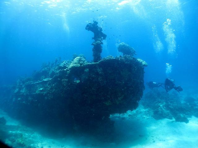 wereldwijd verkocht nieuw aangekomen top kwaliteit Apo Reef National Park