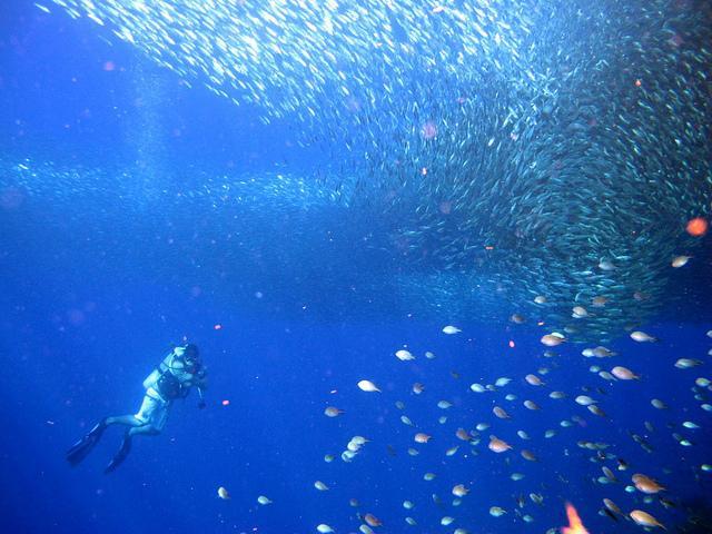 Cebu's Finest Diving Spot: Pescador Island of Moalboal