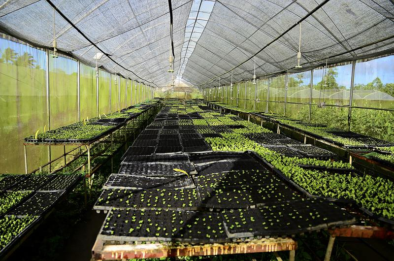 Philippines' First Agrotourism Destination: Costales Nature Farm